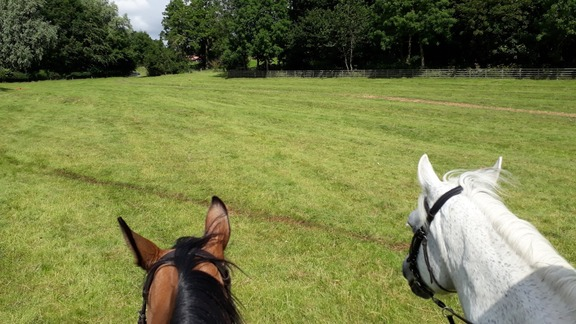 Inviting stretch of bridleway