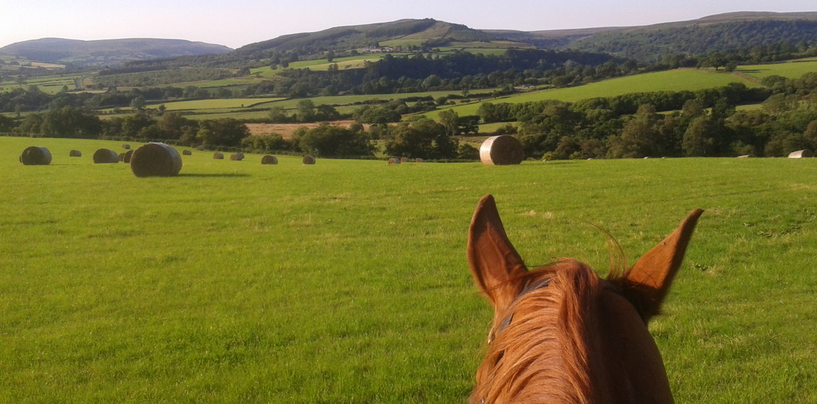 Late summer in Bilsdale from a chestnut mare