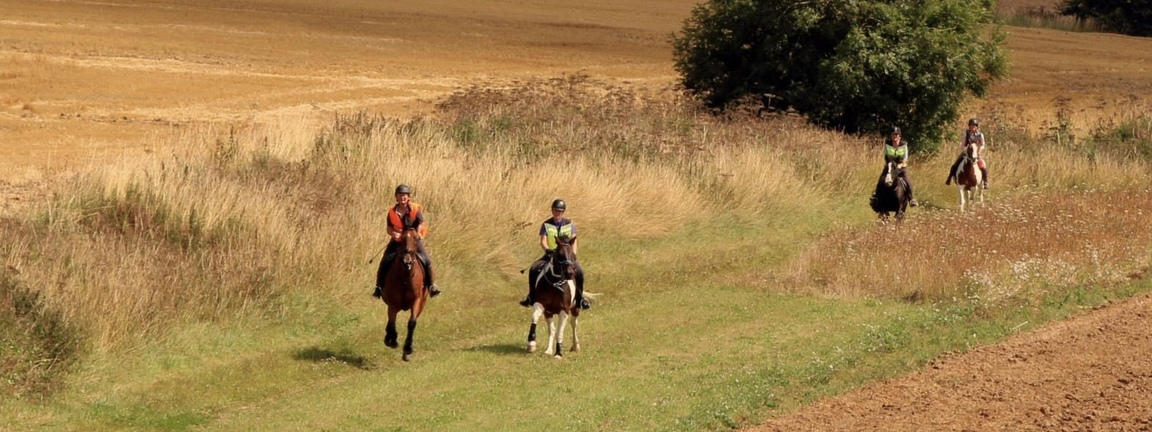 Cantering in the Yorkshire Wolds at harvest-time